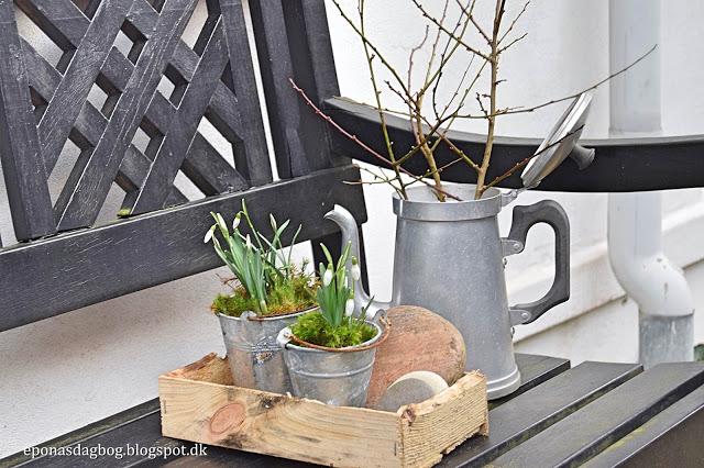 Vintergækker i potter
