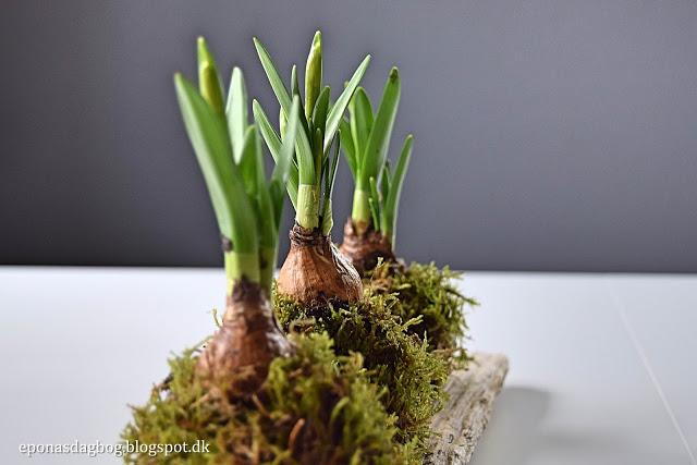 Dekoration med mini påskeliljer