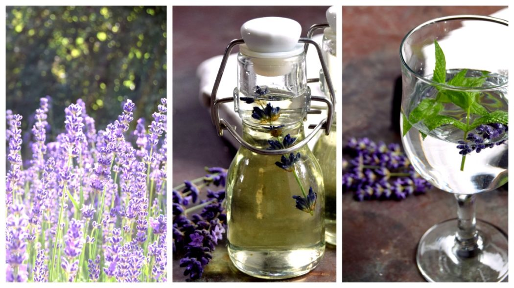 Lavendel – Ideer og opskrifter