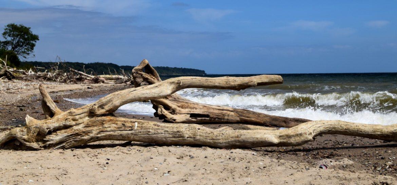 Strand og drivtømmer